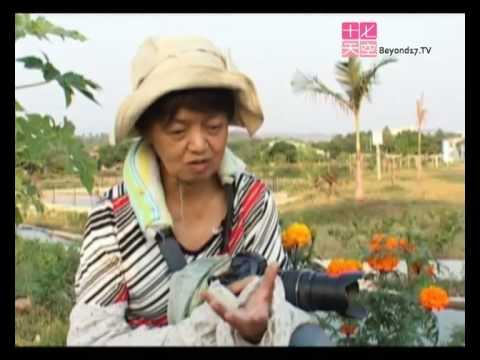 生態攝影師 周聰玲 - YouTube