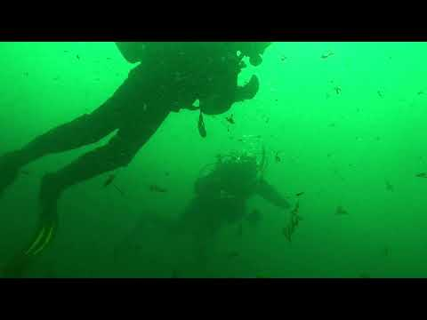 Diveworld Videos | st abbs with diveworld 2018 movie