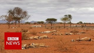 2016 set to be world's warmest year   BBC News