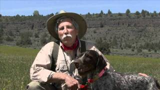 Dog Training & Bird Hunting Tip: Work Like A Dog, Honestly - Wingshootingusa.org