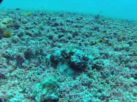 Rockfish Camouflage Demonstration Video