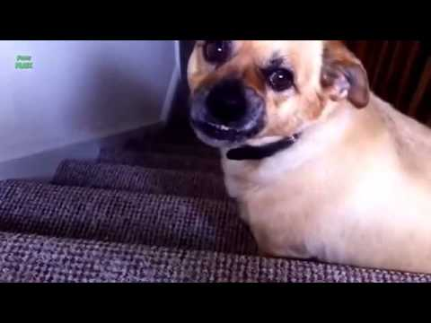 Funny Dogs Smiling Compilation 2014