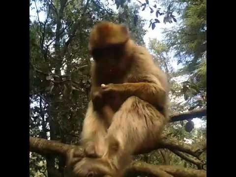 Feeding monkeys in ifrane national park #CUchanginglives
