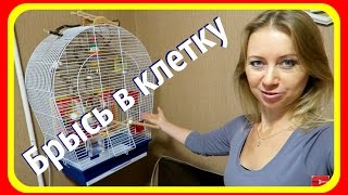 Как заманить попугая в клетку || Советы от Виктории на Vолнистик-TV