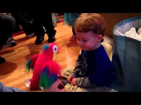 Alex Meets Pete, the Repeat Parrot
