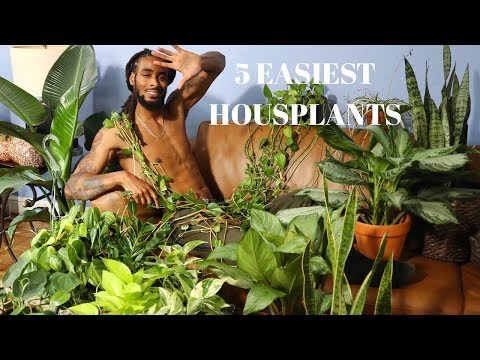 5 EASIEST HOUSEPLANTS FOR BEGINNERS   TIPS + MORE!!!