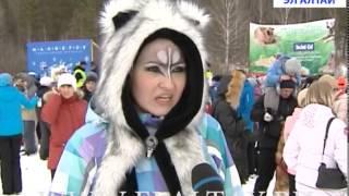 Сибирская хаски, аляскинский маламут, немецкая овчарка и русская борзая