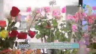 Sensitiva revela todas as dicas sobre o poder das flores - Parte 1