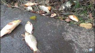 Câu cá giải trí - câu cá chép tốc độ luôn | fishing speed