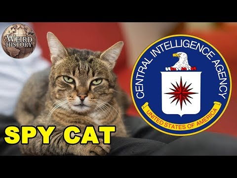 The CIA Once Trained a Cat to Be a Spy