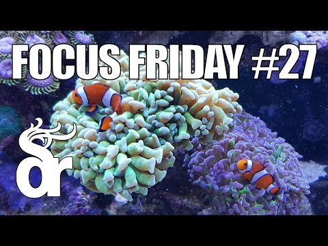 FF#27 | Keeping Clown Fish In Your Reef Tank