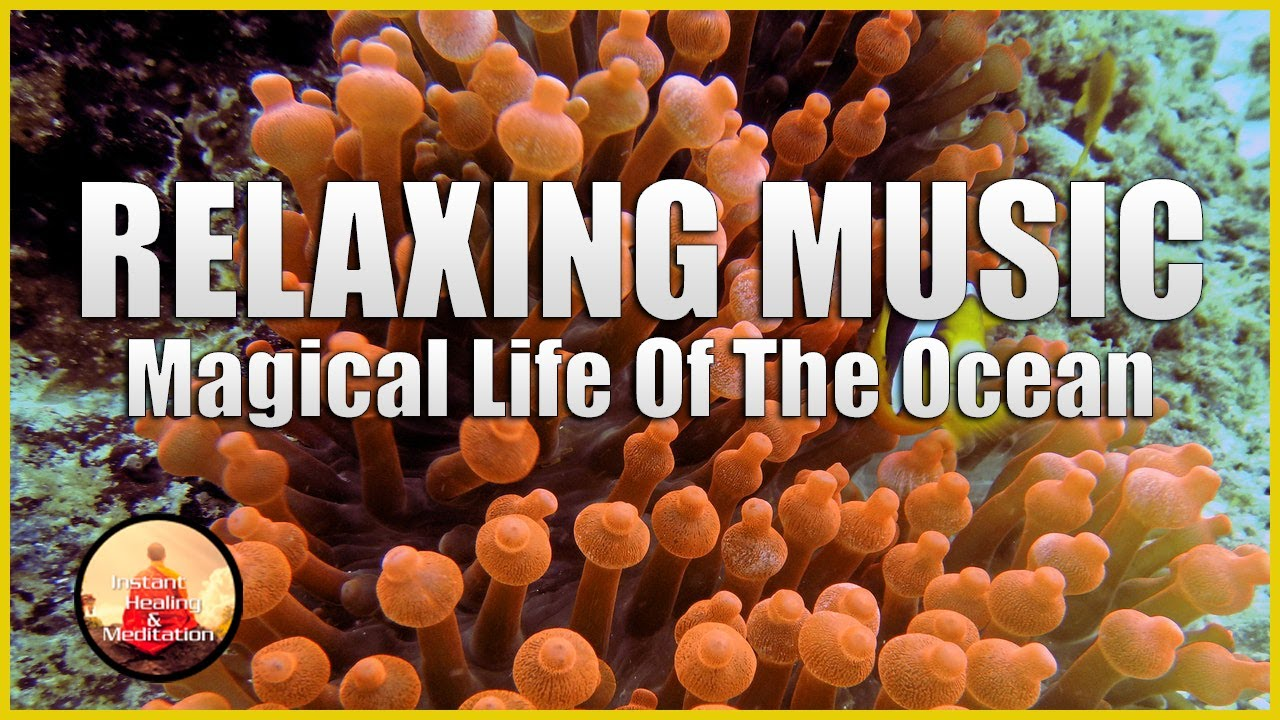 Relaxing Music Magical Life Of The Ocean