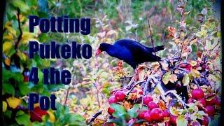 How to make Pukeko stew that tastes bloody good! Video