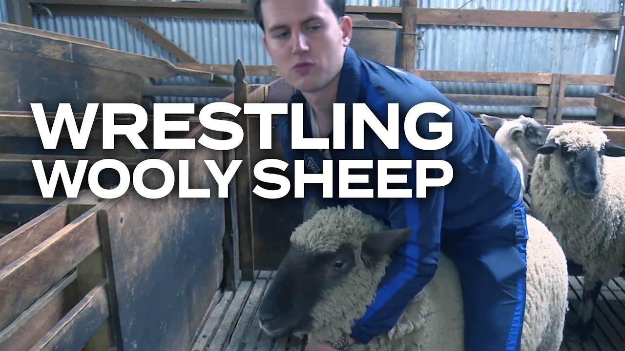 SHEEP WRESTLING WOOLY BEASTS! - Adam & Eve learn how to wrestle with sheep as they train for their Adam vs Eve shearing challenge.