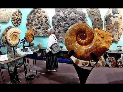 Mind Blowing Fossils At Tucson's Gem, Mineral & Fossil Show 2018 (Part 4)