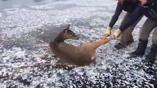 Good samaritans rescue deer off icy lake in northern Ontario