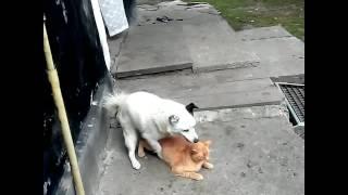dog having sex with cat.Тварини.Секс.Оргія.Порно.