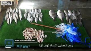 بالفيديو| بسبب الحصار.. الأسماك تهجر غزة