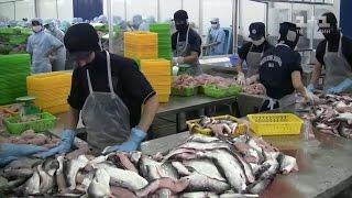 Риба-сміттяр: яку рибу не радять купувати навіть продавці