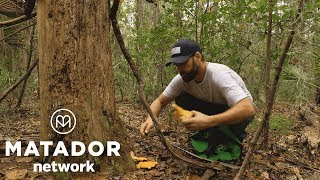 Forest to table: Foraging with Bluffton's Chef Chaun