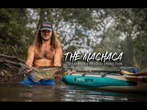 The Machaca: Costa Rica's Hidden Sport Fish