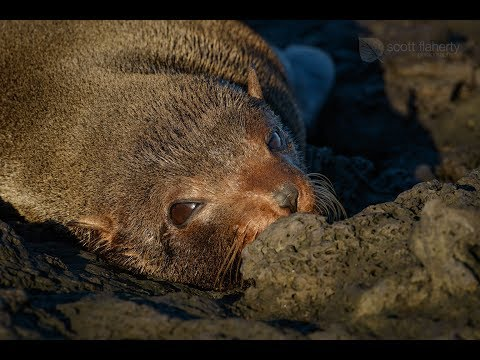 Our Time In The Galapagos
