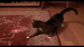 #19 Funny videos - Cute pets, Funny animlals .. (LOL)