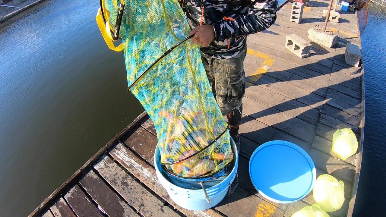在大安魚池釣的魚多到差點扛不起來!魚太多,老闆送去神祕的地方,心都暖了!