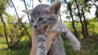 СПАСЕНИЕ КОТЕНОЧКА такого не ожидал никто. Спасли котенка и он нас так отблагодарил Сборник моментов