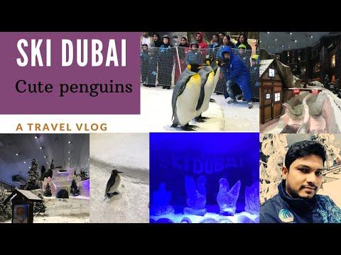 Ski Dubai – Penguins park