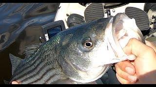 Striped Bass Kayak Fishing - Nj Striper Kayak Trolling With Shads