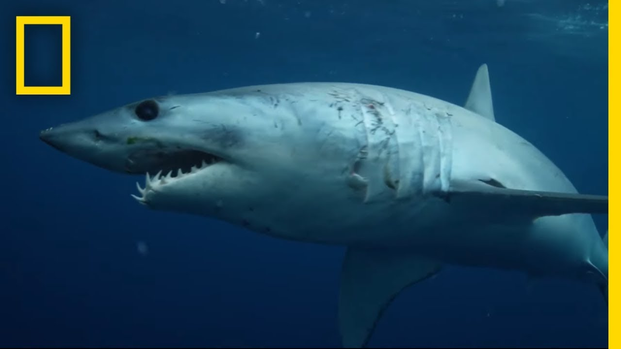 Sharks 101 | National Geographic - YouTube