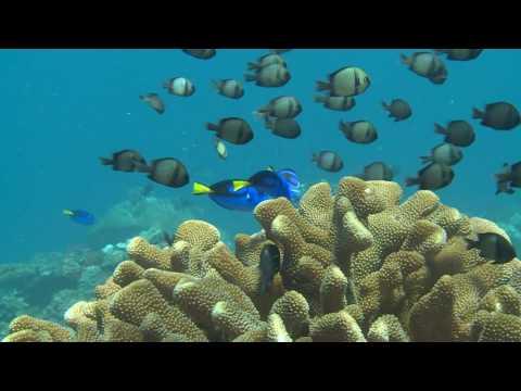 Lissenung Island Resort, New Ireland Province, Papua New Guinea