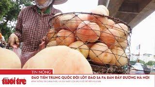 Đào tiên Trung Quốc đội lốt đào Sa Pa bán đầy đường Hà Nội