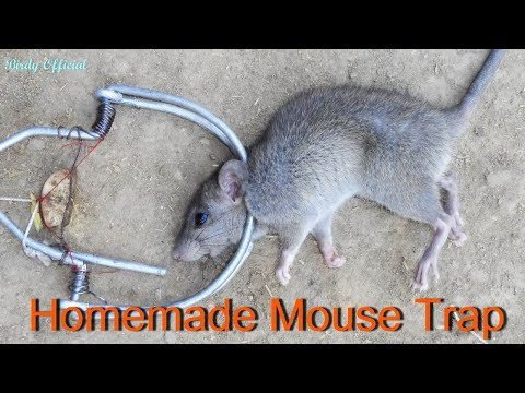 Thumbnail: How To Make a Mouse Trap | Best Homemade Mouse trap