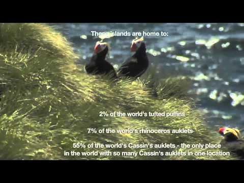 Scott Islands Video