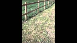 Post And Rail Fencing We Erected