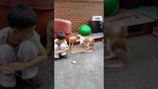 소닉vs 해피 3편 (강아지)