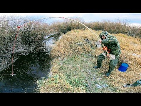 Караси по 1 кг ЁКЛМН ! Как наловить много рыбы? Рыбалка на паук зимой Рыбалка 2020 Рыбалка