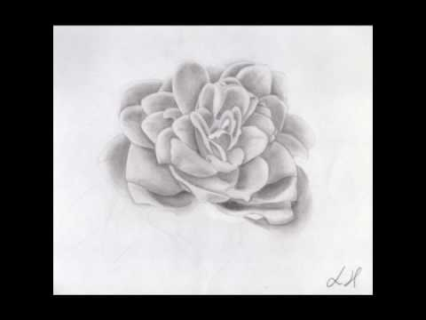 Famoso Flower Time Lapse Speed Drawing / Disegno a matita fiore By  FG73