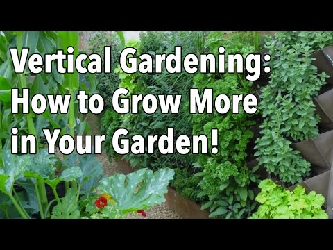 Vertical Gardening - Simple Ideas for a Vertical Vegetable Garden