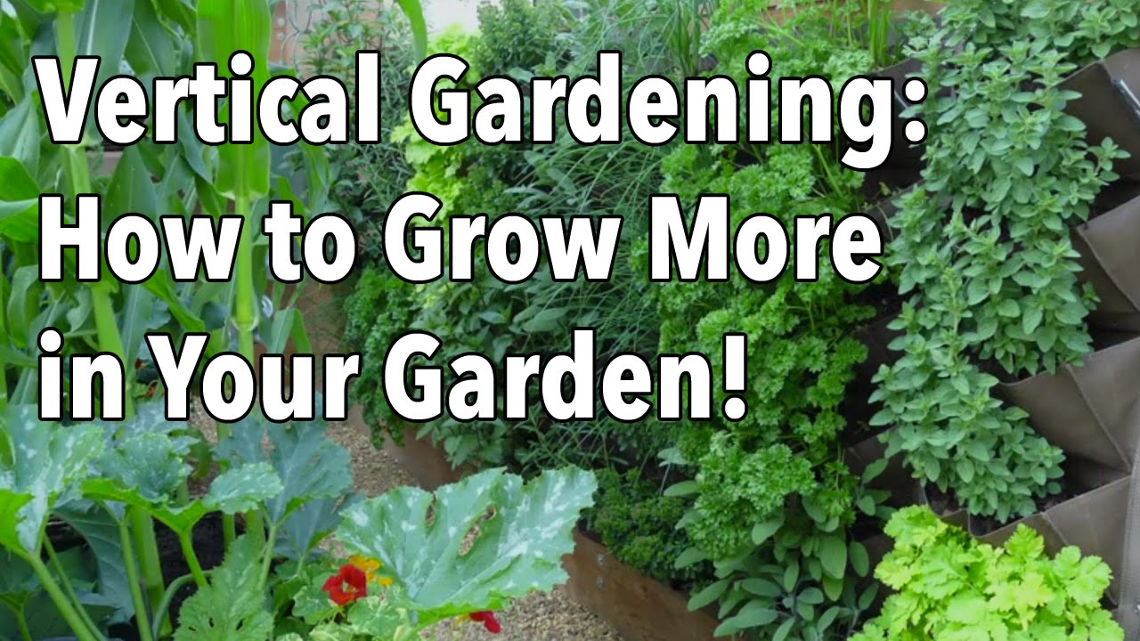 Vertical Gardening   Simple Ideas For A Vertical Vegetable Garden   YouTube