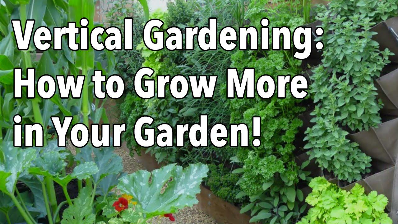 Vertical Gardening Simple Ideas For A Vertical Vegetable Garden