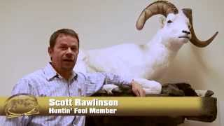 Dall Sheep - Scott Rawlinson