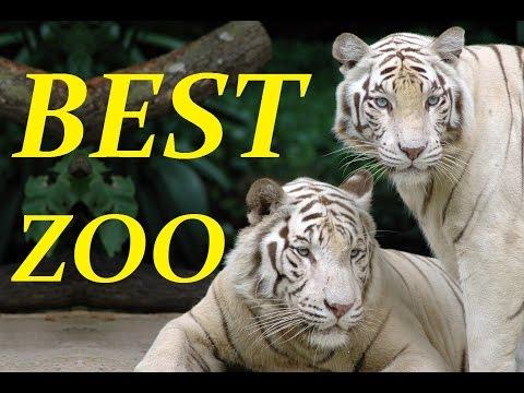 Best Zoo in Europe | Nyiregyhaza Sosto Zoo