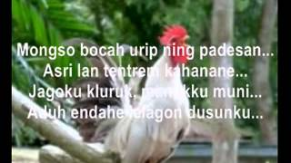 Video Jago Kluruk (Versi Tayub) download MP3, 3GP, MP4, WEBM, AVI, FLV Desember 2017