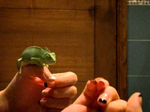 Baby Chameleon hand feeding eating mealworms