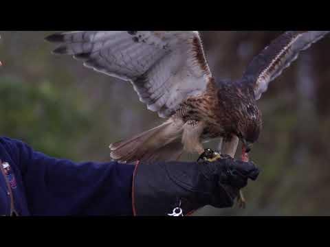 HAWKS Video - Living Water Academy