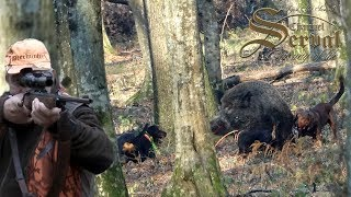Wild Boar hunting in Croatia - Best of Season 2018.- Chasse de sangliers en Croatie - Saison 2018