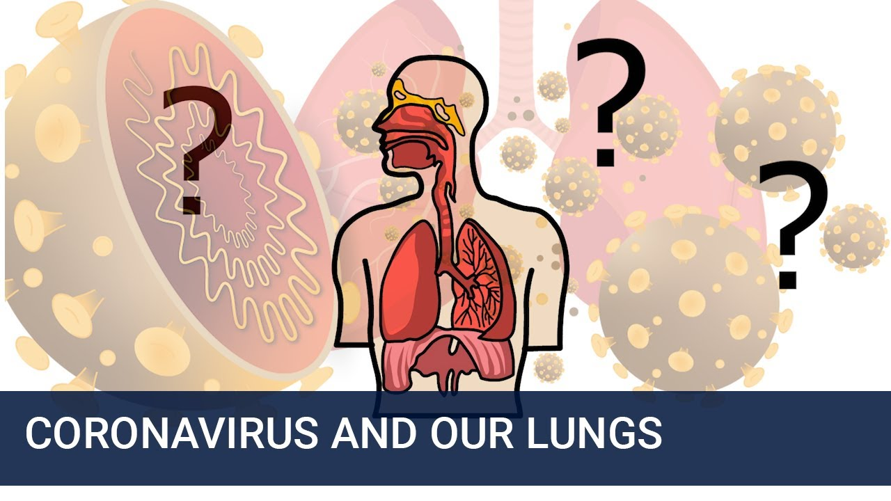 Download How does Coronavirus affect our lungs?